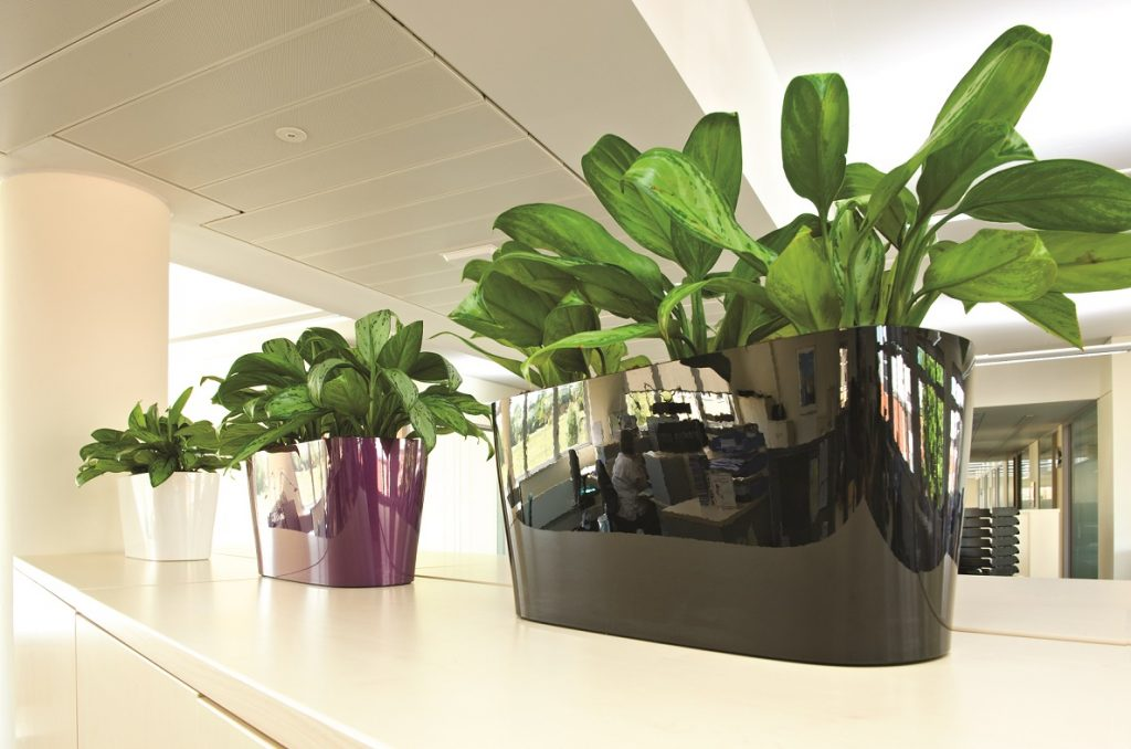 Artificial And Preserved Plants